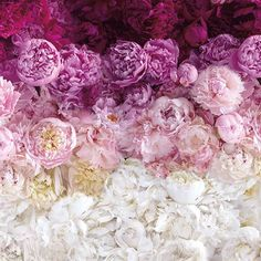 A new skincare product is blooming…coming soon! Life Is Beautiful, Flower Power, Peonies, Natural Remedies, Bouquet, Skin Care, Fresh, Photo And Video, Vegetables