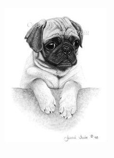 11 x 14 Fawn Pug Puppy Art Print by Jennie Truitt by jennietruitt, $15.00