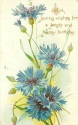 WITH LOVING WISHES FOR A BRIGHT AND HAPPY BIRTHDAY  blue cornflowers (batchelor buttons)