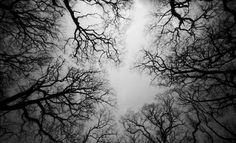 I like this pinhole picture took in the forest because it's like you're laying down and looking up at the sky peering thru the trees. And it definitely holds my attention.