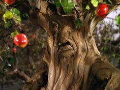 wizard of oz live trees | or the mean old apple trees from the wizard of oz