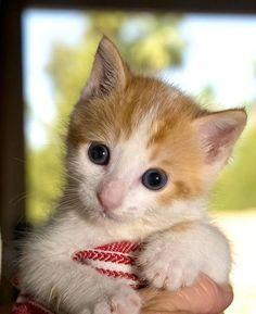 Puff [4]  kitten