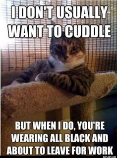 This must have been written by my cat!