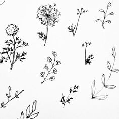Image result for wildflower tattoo drawing