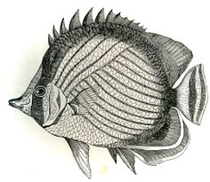 Fish - Royalty free images of vintage black and white illustrations « Eclectic Cycle