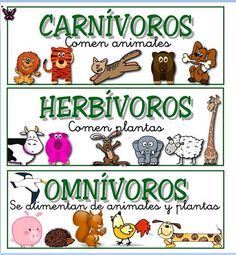 with its different activities that Science Lessons, Science For Kids, Life Science, Science And Nature, Food Chain Activities, Holiday Activities, 2nd Grade Reading Worksheets, Worksheets For Kids, Spanish Posters