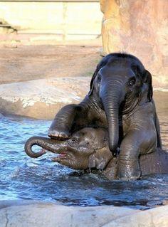 Elephants having fun in the water