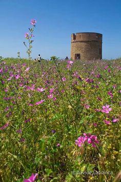 Riserva Naturale di Tor Caldara. Anzio
