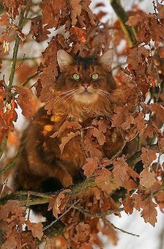 catoflage