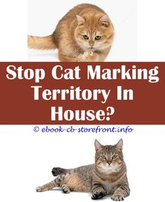 6 Impressive Clever Tips: Moth Spray Safe For Cats male cat sprayed me.Cat Spray Paint can a male cat spray if neutered.Fluoxetine For Cats Spraying.