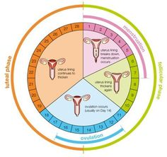Ovulation calculator and the menstrual cycle. The menstrual cycle is by far one … Ovulation calculator and menstrual cycle. The menstrual cycle is by far one of the most elegant physiological phenomena in women. Normal menstruation is defined as the Ovulation Calculator, Pregnancy Calculator, What Is Ovulation, Period Cycle, Ovulation Calendar, Getting Pregnant, Understanding Yourself, How To Know, Blog