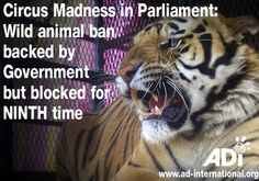 Please help the UK ban animals used in circuses.   PETITION IS HERE BAN ANIMALS BEING USED IN CIRCUSES IN ENGLAND.ALL OF UK! PLEASE SIGN AND SHARE. THEY NEED US NOW http://www.ad-international.org/petitions/?a=process&pid=9