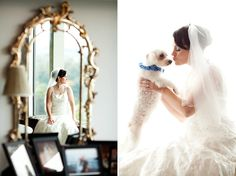 cute dog pictures with the bride