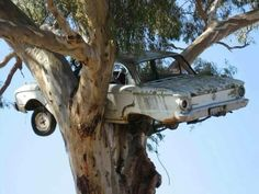 Ford Falcon In a Tree - The Garage Journal Board says this was done for the back of a book cover picture and they never took it down!