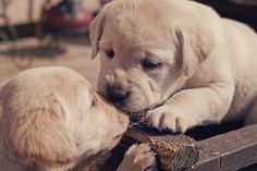 puppy love... literally