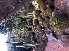 Cactus Park Gran Canaria   Spain