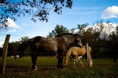 Gorgeous horses in Cades Cove