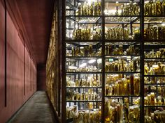 Naturkundemuseum Berlin by Diener and Diener