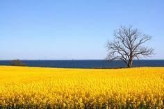 Fyns Hoved,  gule marker.