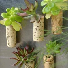 wine cork succulents (magnets). Drill a small hole, fill with potting mix and tuck in a succulent. A drop of water to maintain...=)