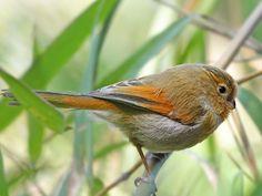 7 Best Flora and Fauna of Arunachal Pradesh images ...
