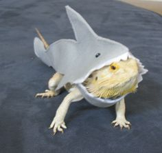 Handmade Felt Bearded Dragon Great White Shark Costume with FREE Bow! on Etsy, $8.82 AUD