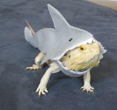 Handmade Felt Bearded Dragon Great White Shark Costume with FREE Bow! on Etsy, $8.82 AUD