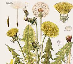 SHOT de Ilustración Botánica / 14 de abril ~ CasaTinta