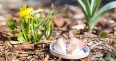 Knoblauch sollte in keinem Garten fehlen! Wie vielfältig du die scharfe Knolle als natürlichen Pflanzenschutz einsetzen kann, erfährst du hier.