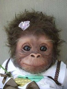 Monkey chimpanzee happy smiling dressed up flower hair cute animals wild wildlife species planet earth nature pics pictures photos images Super Cute Animals, Cute Funny Animals, Cute Baby Animals, Animals And Pets, Cutest Animals, Wild Animals, Smiling Animals, Funniest Animals, Animal Babies
