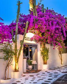 "ValantisM's Instagram profile post: ""Mykonos 😍 😍😍 Happy evening dear friends🙋♂️😊🥂🎶 !!!! .  #mykonos #divine_worldplaces  #Santorini  #greece #europestyle_ #kings_greece…"" Samos Greece, Mykonos Greece, Happy Evening, Italian Cafe, Destinations, Bohemian Interior Design, Best Flights, Destination Voyage, Travel Abroad"