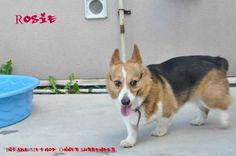Adopt - Hamilton Burlington SPCA