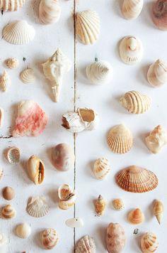 Shells #beach #summer #shells