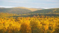 As seen in Lapland. #visitlapland #ruska #karigasniemi - Niina Tähdensalo (@NiinaTahdensalo)   Twitter