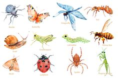 Watercolor Insects and Spider by Corner Croft on @creativemarket