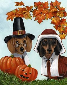 Dachshund Thanksgiving
