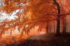 Autumnal path by Janek Sedlar