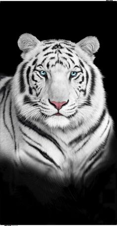 Great Photos white Bengal Cats Thoughts Initial, let's talk about what is really a Bengal cat. Bengal pet cats absolutely are a pedigree reproduce whi. Majestic Animals, Rare Animals, Funny Animals, Wild Animals, Bengalischer Tiger, Tiger Face, Tiger Cubs, Bear Cubs, Beautiful Cats