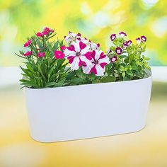 Turn your windows into a lush, mini-jungle with pretty packs of flowering plants. These space-saving planters are just right for a modest indoor garden. Terrace Garden, Indoor Garden, Indoor Plants, Outdoor Gardens, Growing Flowers, Planting Flowers, Planter Accessories, Save Mother Earth, Garden Online