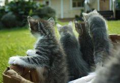 kittens, basketfull of them!