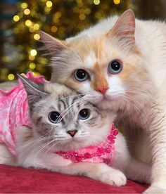 <3...Kitty cats portrait - Mommy and Me - priceless!