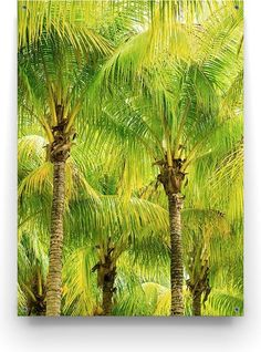 Geef je tuin een extra zomerse uitstraling met de Palm Forest tuinposter van Made on Friday. Cactus Plants, Palm, Animals, Animales, Animaux, Cacti, Cactus, Animal, Animais