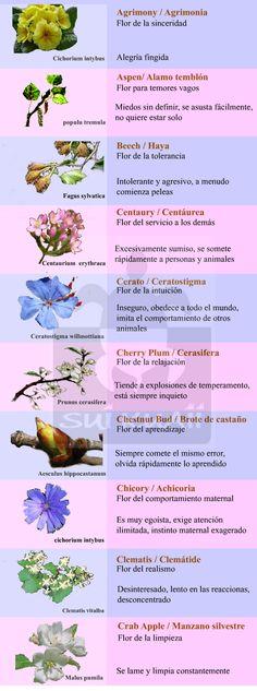Flores de bach para animales - Buscar con Google