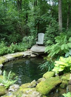 A garden pond surrounded by shade plants, lush and green photo only