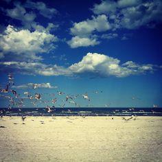 seagulls, beach