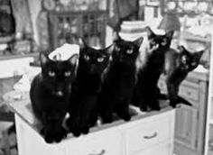Image result for black cats