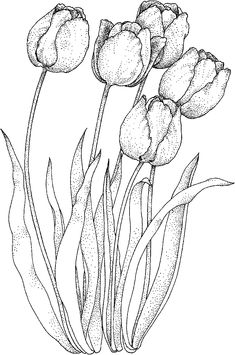 Printable Beautiful Tulip Coloring Pages - Free Coloring Sheets Painting Patterns, Fabric Painting, Painting & Drawing, Tulip Drawing, Realistic Flower Drawing, Flower Coloring Pages, Coloring Book Pages, Flower Sketches, Flower Drawings