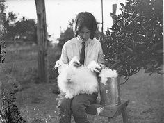 Girl with a white angora rabbit, 1930s / by Sam Hood by State Library of New South Wales collection, via Flickr