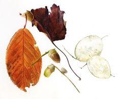 Elaine Searle http://www.paintbotanical.com/ Workshops, weeklong classes and online tutorials