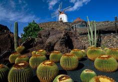 Cactus Garden Jardín de Cactus #Lanzarote